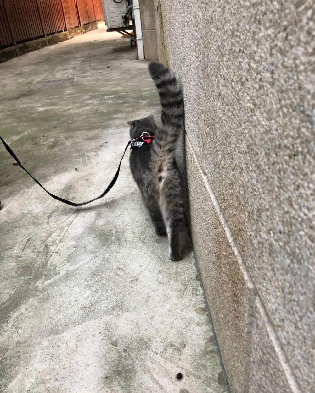 猫 1.17-7